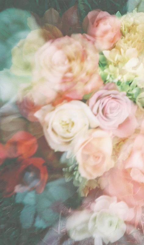 roses-gaze